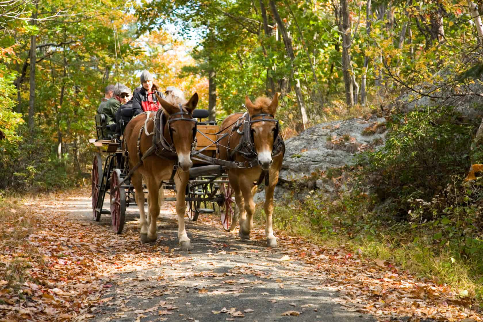 Mohonk_Fall Foliage Carriage Ride