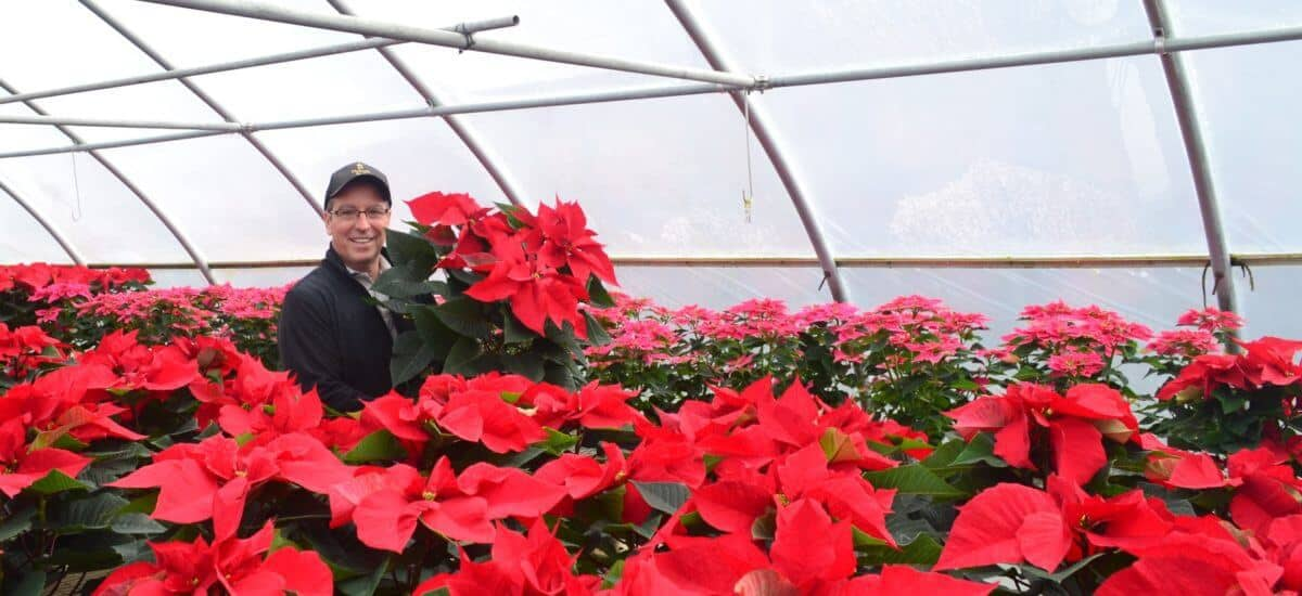 Deck the Halls with Poinsettias